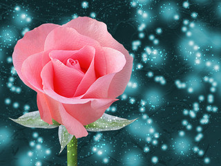 Beautiful pink rose with space for your text