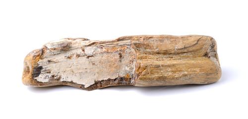 petrified wood, isolated on white background