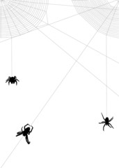 three spiders in two web corners