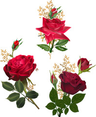 three dark red roses and buds isolated on white