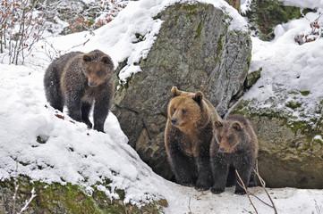 Baerenfamilie vor Höhle