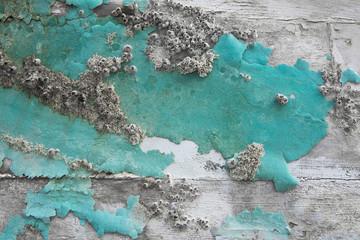 Holz von einem alten Schiff: abgeblätterte Farbe in Türkis