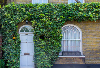 Ivy Swallowing a House