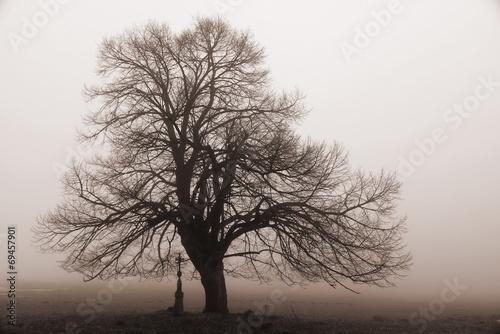 canvas print picture Baum im Nebel