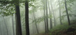 green forest landscape after rain