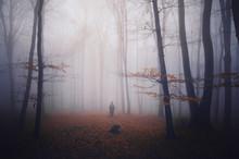 Automne coloré dans la forêt de brouillard sombre