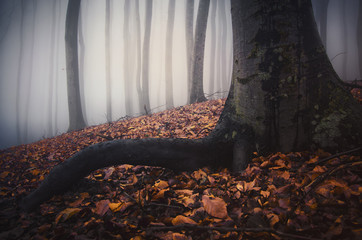 root of a tree on the ground of a forest in autumn