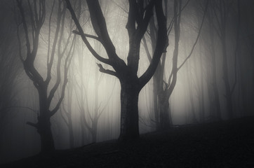 halloween night in a spooky forest