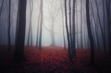 misty forest landscape with colorful leaves on the ground