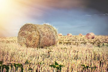 Sunset on the field with straw bales