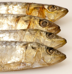 Fresh sardines on white background