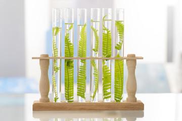 Biotechnologie, concept du clonage