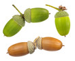canvas print picture - set of acorns isolated on white