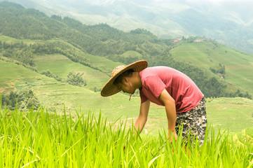 Rice of Longsheng