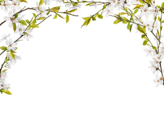 half frame from flowers on spring tree branches