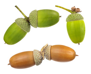 set of acorns isolated on white