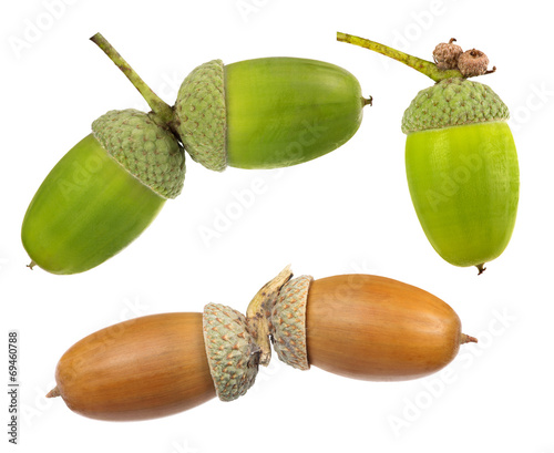 canvas print picture set of acorns isolated on white