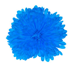blue flower with lot of petals