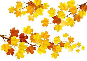 Autumn leaves on the branches. Vector