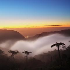 Brume et fougères au crépuscule, La Réunion.