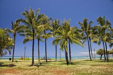 Waikiki beach panorama