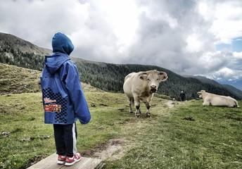 Faccia a faccia con la mucca