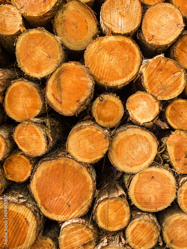 canvas print picture Pile of cut treetrunks