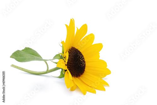 Papiers peints Tournesol Sonnenblume
