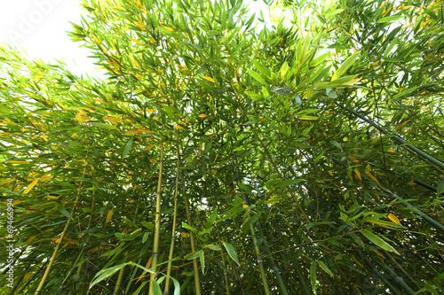 Foto Spatwand Bamboe Bambus pflanze von unten