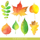 Fototapety Vector watercolor autumn leaves