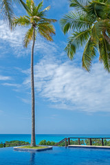 Resort pool with palm-tree over the ocean under the sky