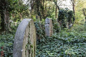 Verwunschener Friedhof