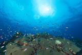 Arrecife de coral - 69473985