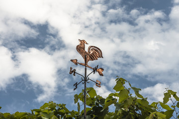 Gallo segnavento