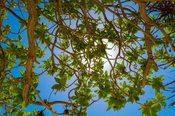 Branches of tropical trees with green leafs in front of bright s