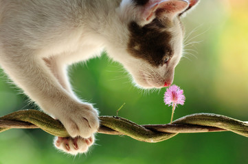 Smell of flower