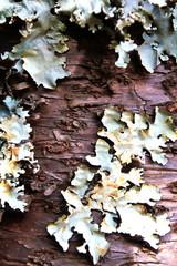 lichen growing on wood