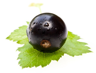 Currant on a white background
