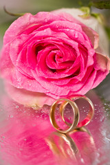 Gold wedding rings and rose