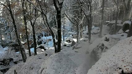 bosco dopo una nevicata autunnale