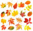 Leinwandbild Motiv Autumn leaves collage isolated on white