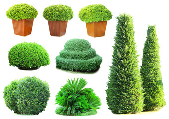 Collage of green bushes isolated on white