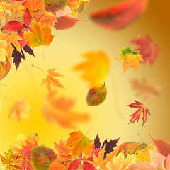 Vivid autumn leaves