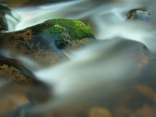 Stone in the blue mountain stream with mossy carpet