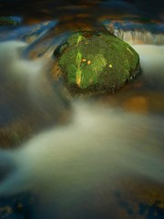 Stone jammed in the mountain river with wet mossy carpet