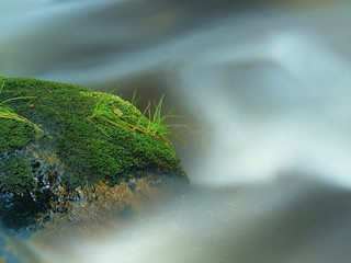 Green stone in foamy river with wet moss and stalks of grass