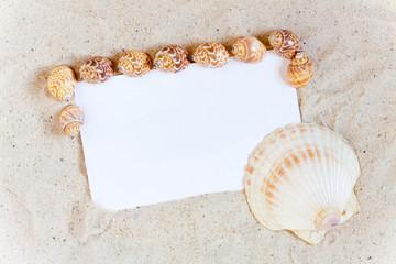 Muscheln rahmen leere weiße Ansichtskarte