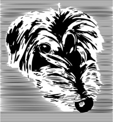 Cute monochrome lurcher dog