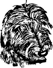 Lurcher or wolfhound monochrome