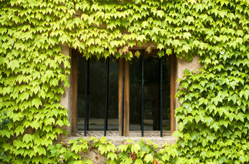 Window covered with green plants